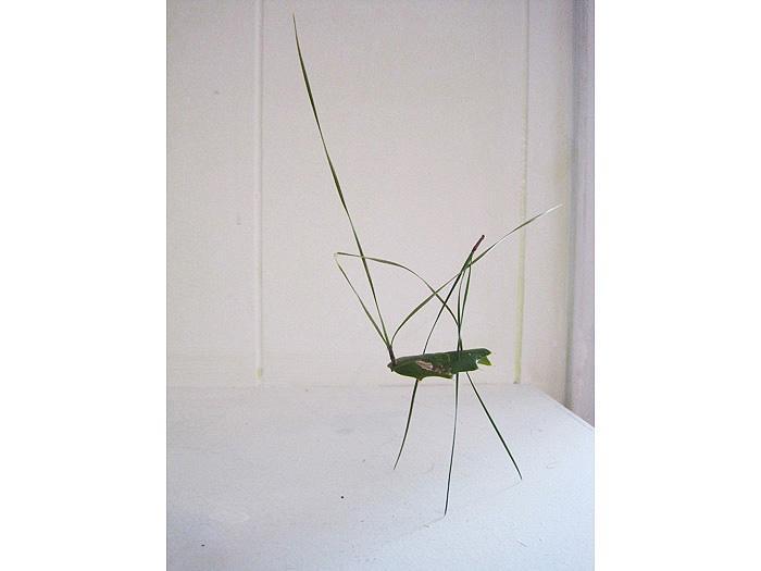 5.grasshopper3
